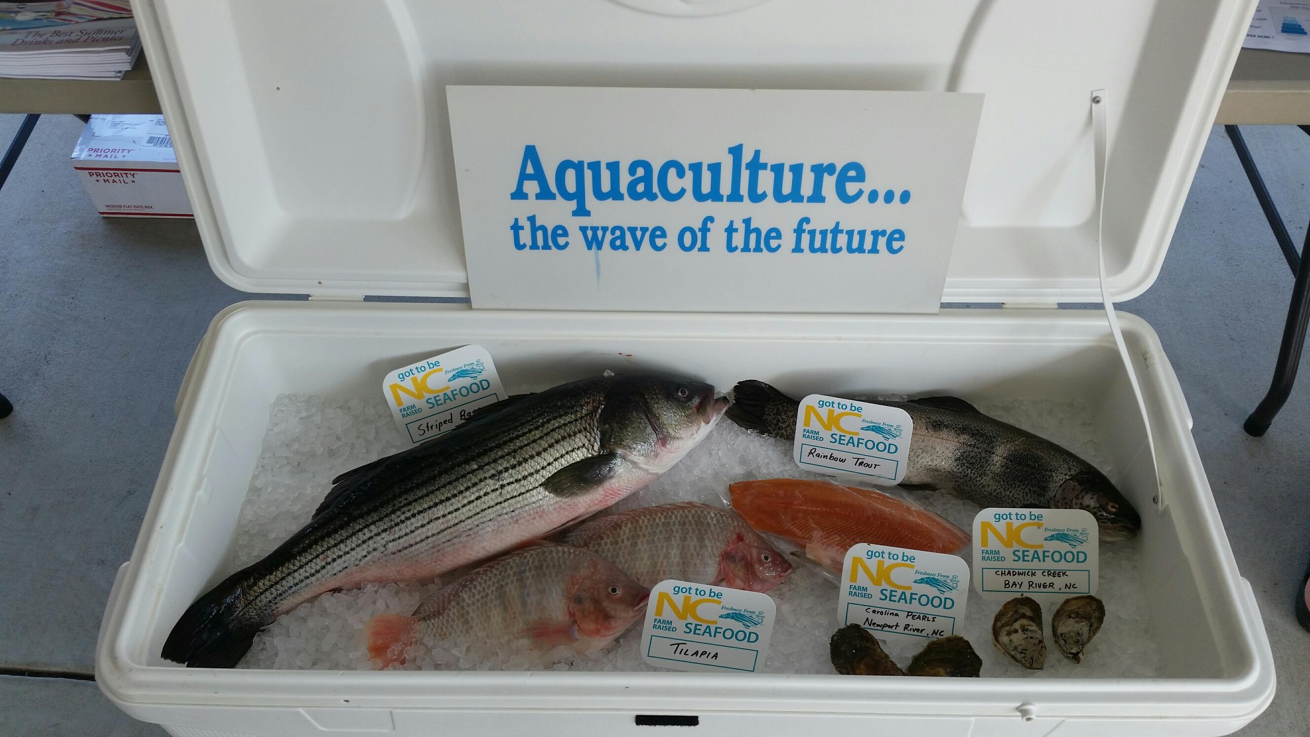 Cultured Seafood Festival in New Bern, N.C.